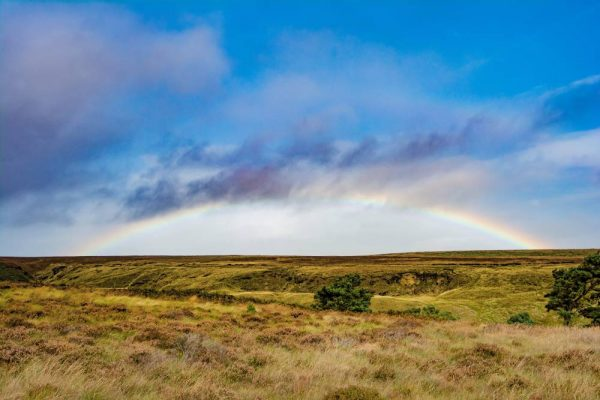 small business can save the world